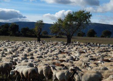 JARC reclama l'exempció de quotes de la Seguretat Social per als autònoms agraris