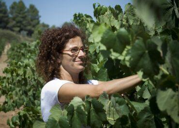 No hi haurà viticultura sense viticultors