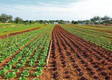 JARC trasllada als polítics catalans la necessitat de donar més suport al sector agrari professional i als joves