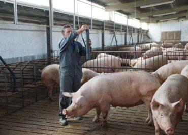 La continuïtat de la bonança del porcí depèn del sentit comú del sector i de la implicació de l'Administració