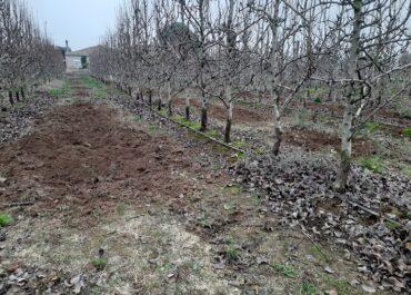 La Paeria ha de controlar la fauna de l'Horta de Lleida i compensar pels danys