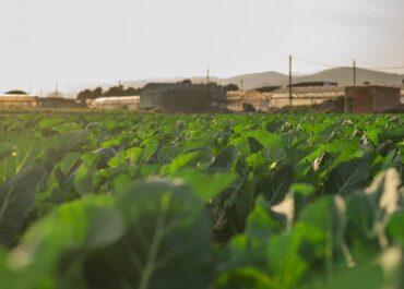 L'ampliació de la ZEPA i el projecte de l'ACA deixa molts pagesos del Parc Agrari del Llobregat sense sortida