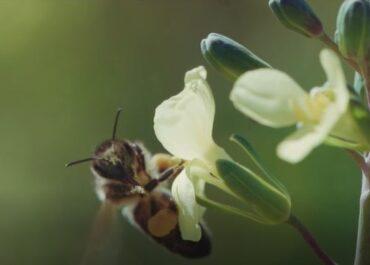 Les abelles necessiten paisatges mosaic i l'agricultura en forma part