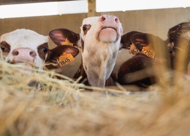 Exigim a Garzón que rectifiqui públicament per les declaracions contra el consum de carn