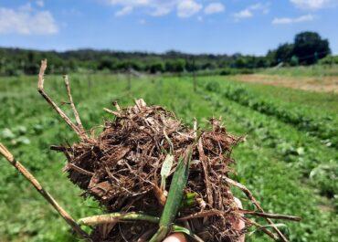 L'agricultura regenerativa manté el sòl viu i redueix les emissions